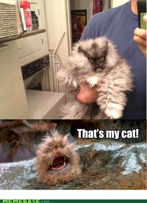 cat,Cats,colonel meow,dark crystal,fizzgig,look alikes