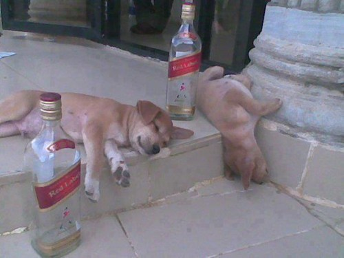 crunk critters,puppies,rough night,too much