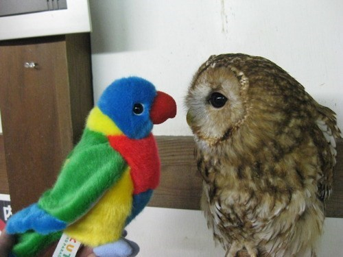 stuffed animals parrots birds Owl who are you squee