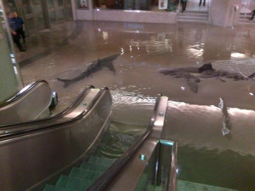 escalator shark tank shark week sharks