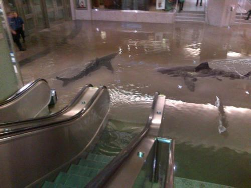 escalator shark tank shark week sharks - 6616270080