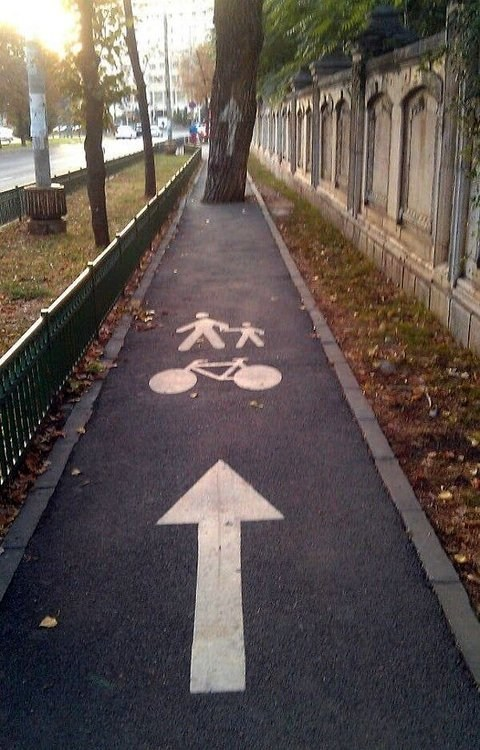 bicycle path,bike path,tree