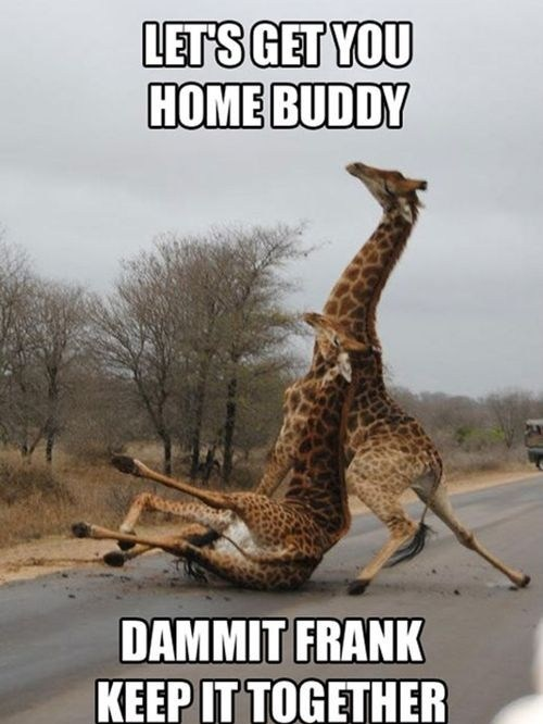 dammit frank,drunk giraffes,lets-get-you-home,never again
