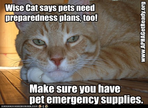 APHA captions Cats disasters national preparedness month prepare - 6616607488
