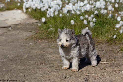 cyoot puppy ob teh day dogs flowers Fluffy puppy what breed