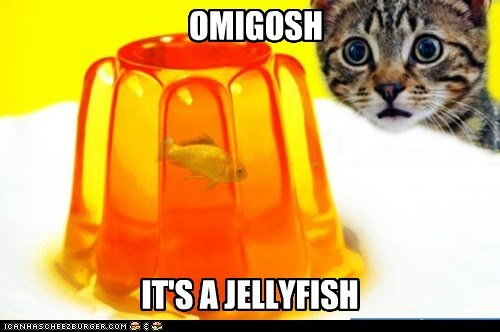 OMIGOSH IT'S A JELLYFISH
