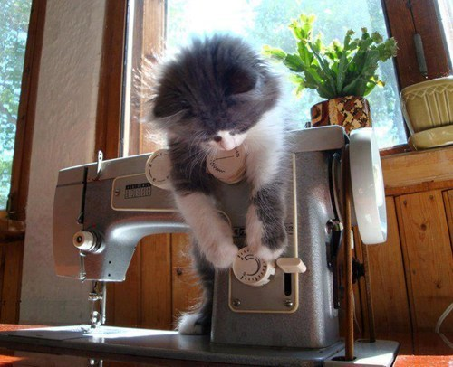 Cats,cyoot kitteh of teh day,kitten,sewing,sewing machines