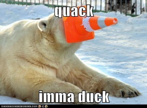 quack,duck,polar bear,traffic cone,impression