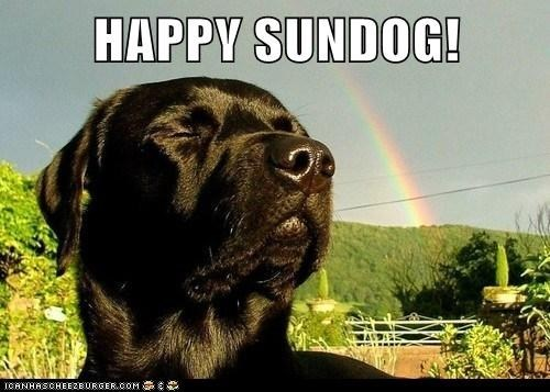 dogs happy sundog labrador rainbow Sundog