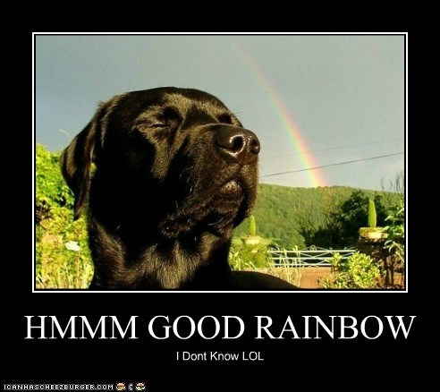 HMMM GOOD RAINBOW I Dont Know LOL