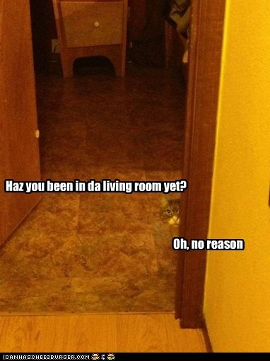 captions Cats guilty lie living room suspicious