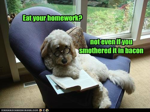 no thank you,dogs,glasses,book,dog ate my homework,what breed,bacon
