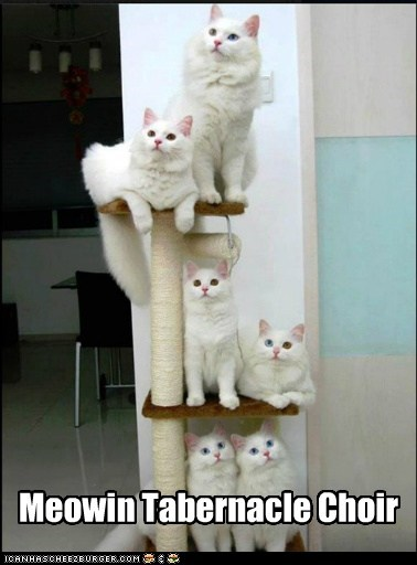 captions,cat tree,Cats,ceiling cat,choir,mormon,Music,pun,sing