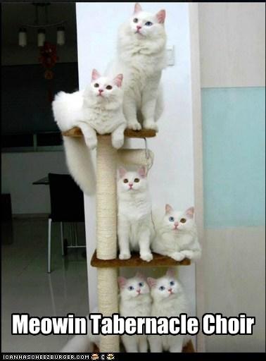 captions cat tree Cats ceiling cat choir mormon Music pun sing - 6617795072