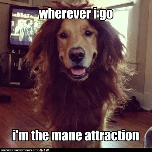wherever i go i'm the mane attraction