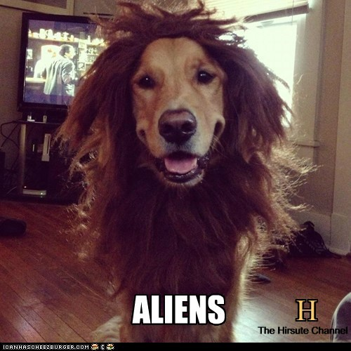 costume,Aliens,dogs,wig,meme,ancient aliens,golden retriever,history channel