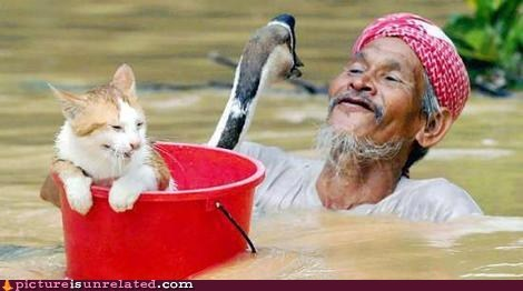 bucket,cat,flood,story