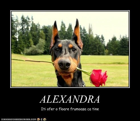 ALEXANDRA Iti ofer o floare frumoasa ca tine