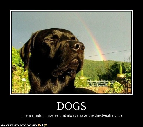DOGS The animals in movies that always save the day.(yeah right.)
