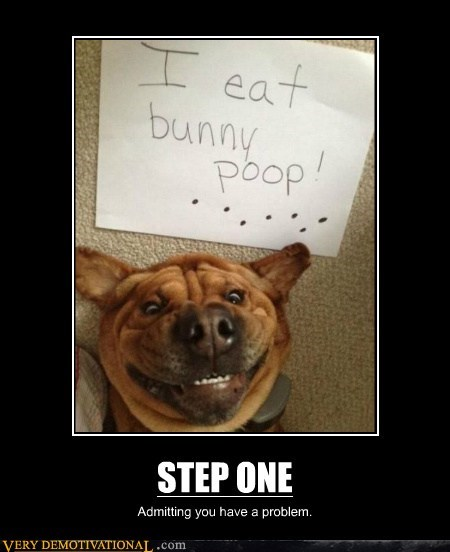 bunny,dogs,poop,step one