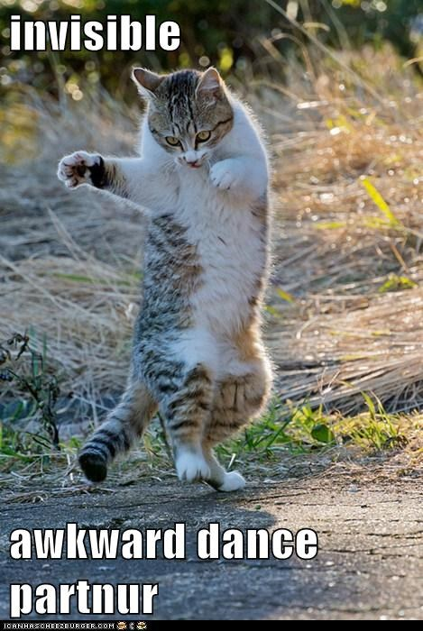 Awkward captions Cats dance dance partner invisible partner