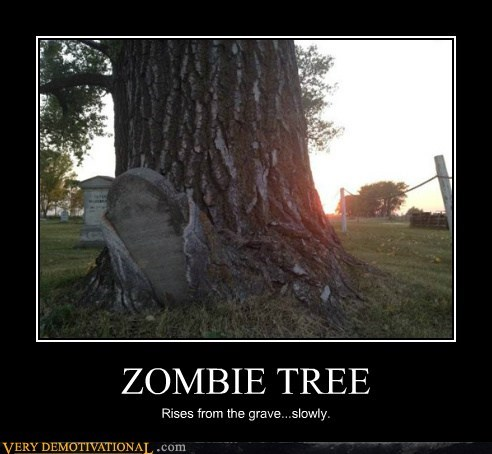 ZOMBIE TREE Rises from the grave...slowly.