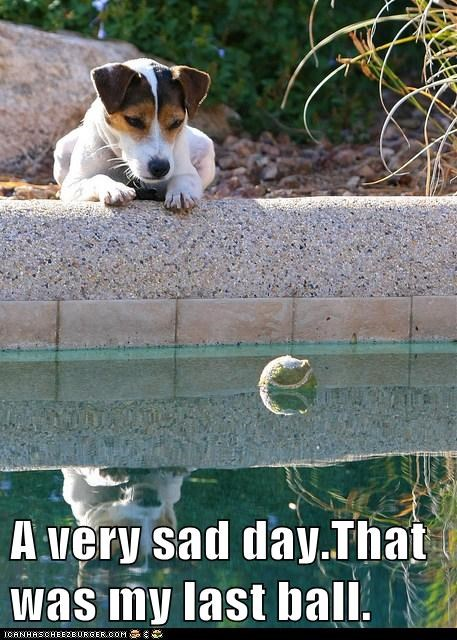 dogs,sad dog,swimming pool,tennis ball,jack russell terrier