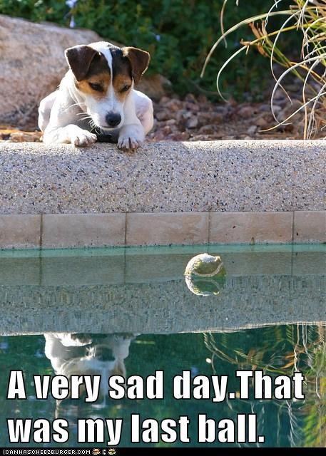 sad dog swimming pool tennis ball jack russell terrier - 6618510848