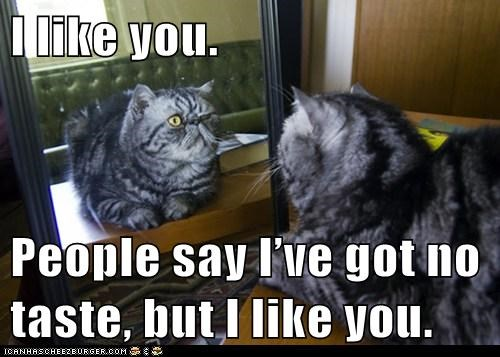 captions,Cats,i like you,like,mirrors,people,taste
