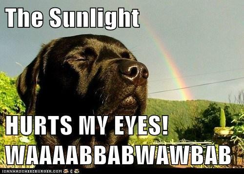 The Sunlight  HURTS MY EYES! WAAAABBABWAWBAB