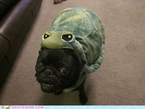 reader squee squee pug dogs costume turtle pet - 6618853888