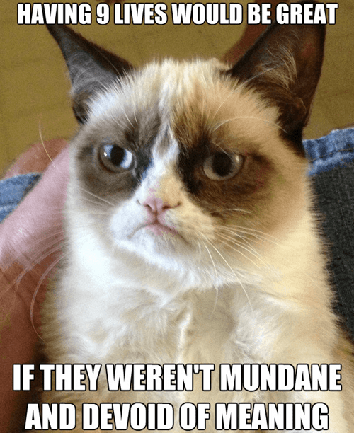 9 lives,captions,Cats,Death,depressed,frowning,grumpy,Grumpy Cat,life,lolcats,mundane