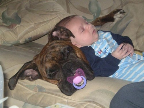 adorable,baby,dogs,sleeping