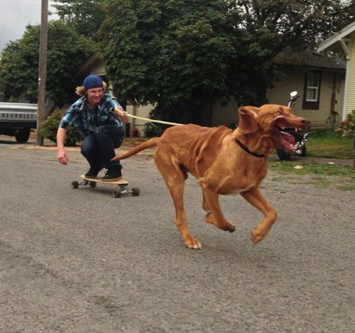 derp,dogs,pets,skateboarding,skating,whee