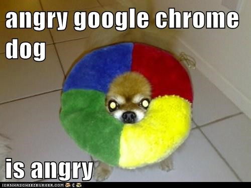 Cheezburger Image 6619626496