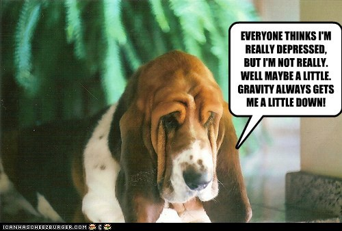 depressed basset hound down sad dog Gravity - 6619656192