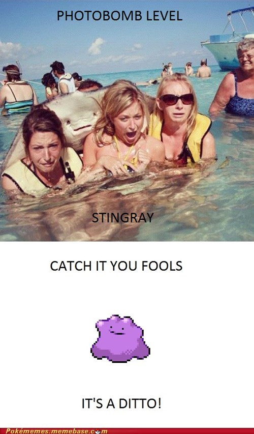 ditto,IRL,photobomb,stingray