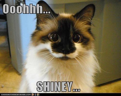 captions Cats pretty shiny stare - 6619804160