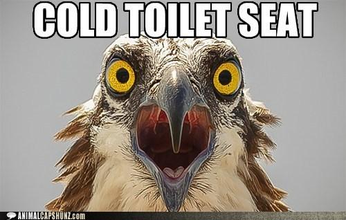 eagle shock cold toilet seat surprise - 6619872000
