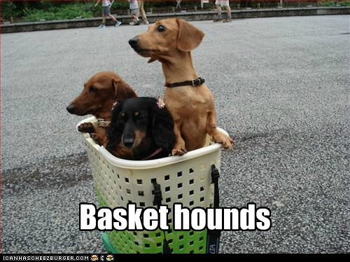 Basket hounds