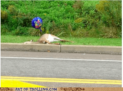road kill,get well soon,deer