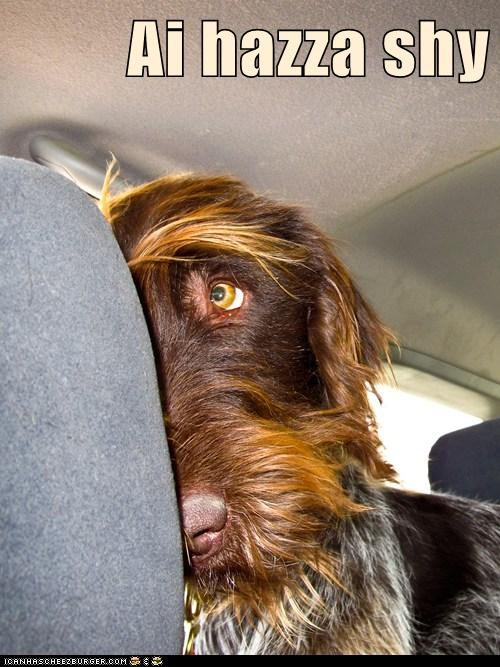 dogs shy car what breed hiding