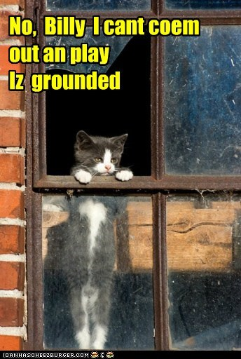 captions Cats grounded kid mom play sorry window