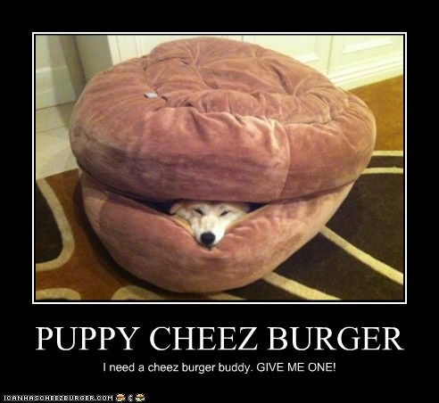 PUPPY CHEEZ BURGER I need a cheez burger buddy. GIVE ME ONE!