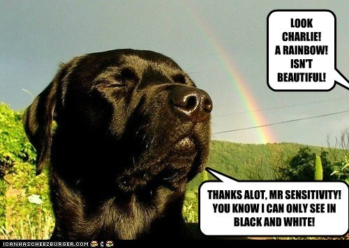 dogs,labrador,color blind,colors,rainbow