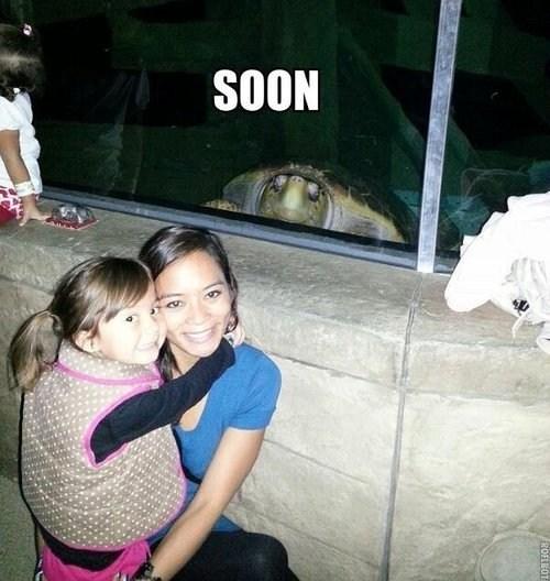 SOON Terrifying turtle windows - 6621243648