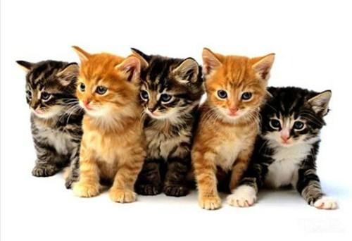 kitten cam