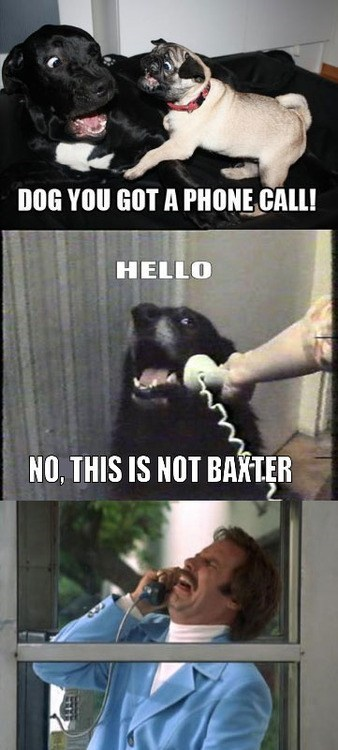 actor celeb comic dogs funny hello this dog meme Will Ferrell - 6621317120