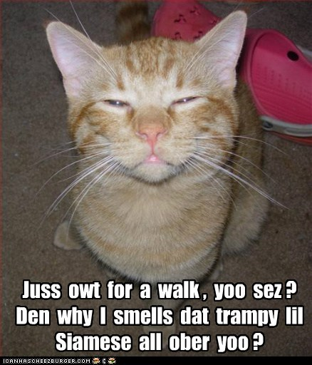 betrayal captions Cats cheat homewrecker love relationship romance siamese - 6621324288