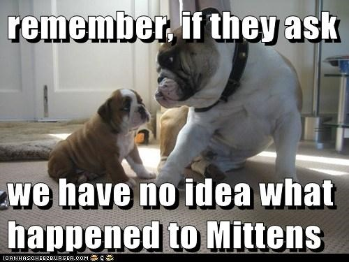 mittens dogs cover up puppy bulldog i have no idea kitten papa